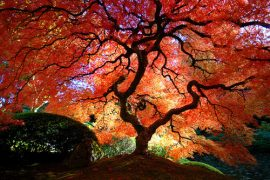 Draw nature pretty separate with comma so beauty tree favim com 46101