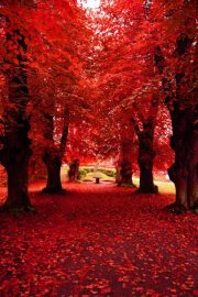 Fall beautiful nature 22666857 600 902
