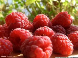 Raspberries wallpaper fruit 7152075 1024 768